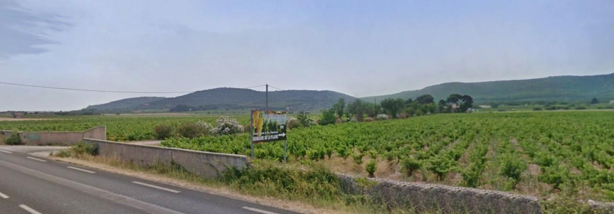 Domaine de la Plaine, producteur de muscat de Frontignan