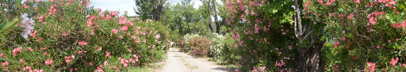 Entrée du Domaine de la Plaine, producteur de muscat de Frontignan